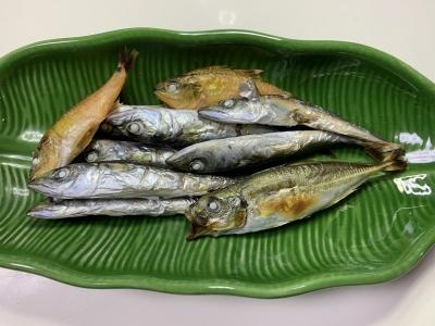 我が家の兄妹猫の朝食は釣りたてのアジとサバとネンブツダイを焼いたもの