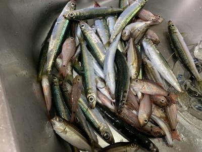 2021年9月19日 北条湾釣行 釣果