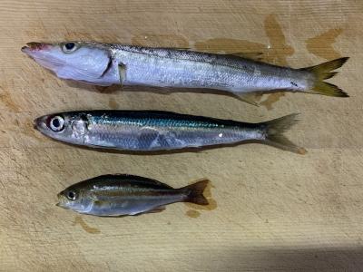 2021年9月26日 北条湾釣行 釣れた魚種