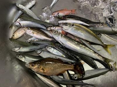 2021年10月17日 北条湾釣行 釣果