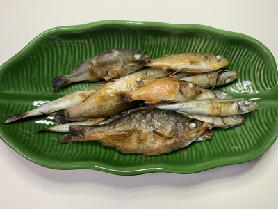 我が家の兄妹猫の朝食は釣りたてのトウゴロウイワシ、ネンブツダイ、ウミタナゴ、イサキを焼いたもの