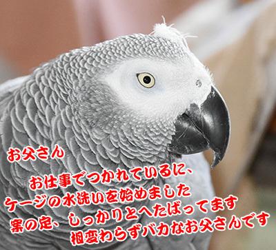 1_kannna_.jpg