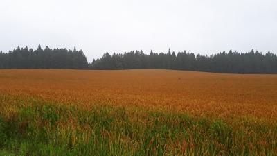 20210701小岩井麦