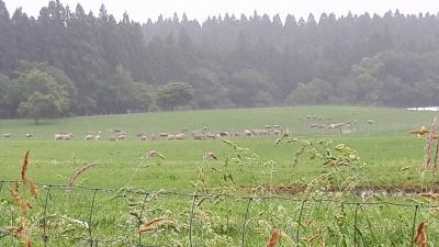 20210701小岩井羊