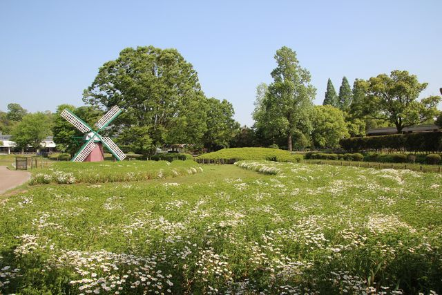 IMG_9812風車前花壇