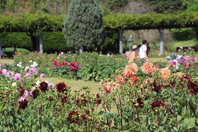 IMG_7134四季の花壇