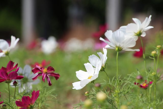 IMG_7154四季の花壇