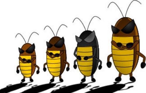 ゴキブリ全員