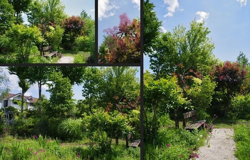 IMGP0968-horz-vert-horz.jpg