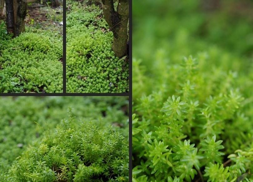 IMGP3408-horz-vert-horz.jpg