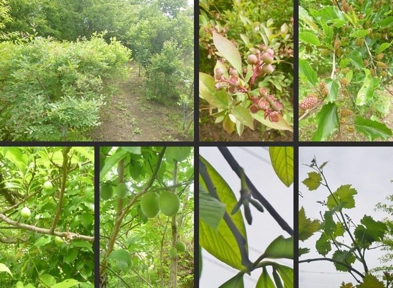 P1060481-tile-vert.jpg