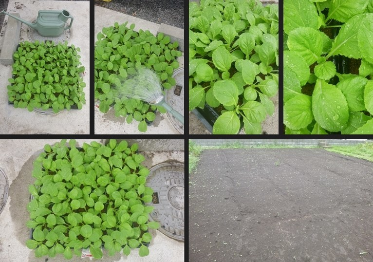 P1090354-horz-vert.jpg