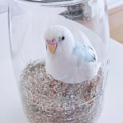 ガラス瓶の中のラリマー