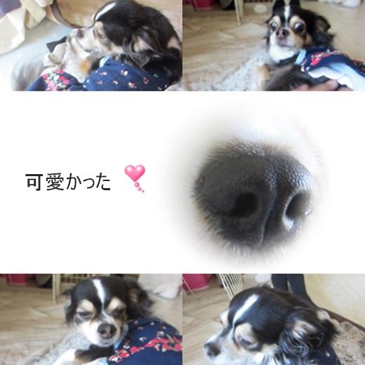 cats_202106111430326cf.jpg