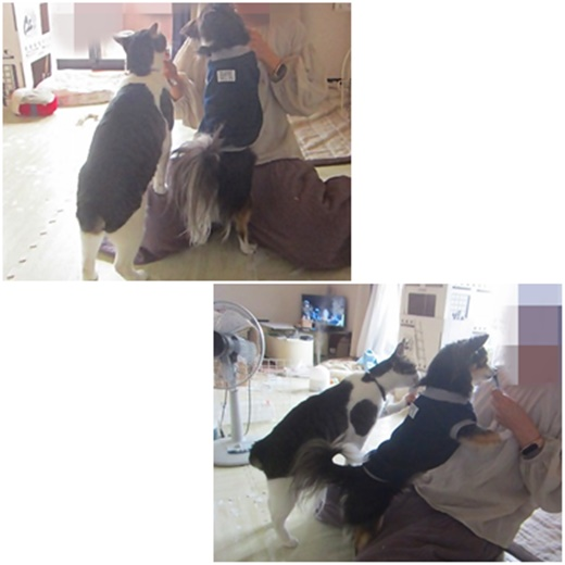 cats_20210615212938a39.jpg