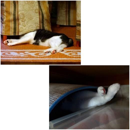 cats_20210615222802f62.jpg