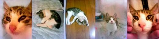 cats_202107171440498e8.jpg