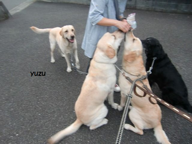 yuzu_20210612104131099.jpg