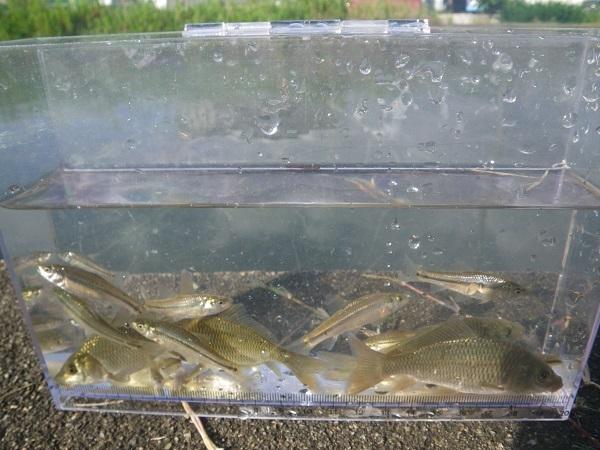 魚種の確認