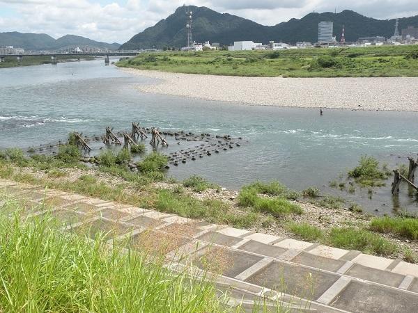忠節橋下流のガリ