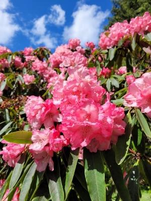 botanicgatrden0805214