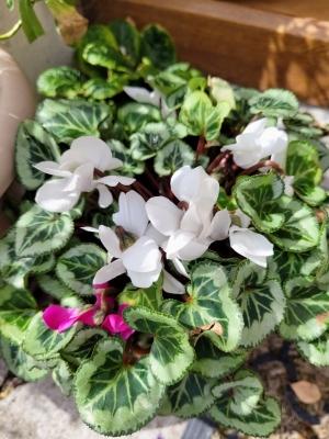 springflowersinsummer0721