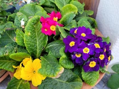 springflowersinsummer07212