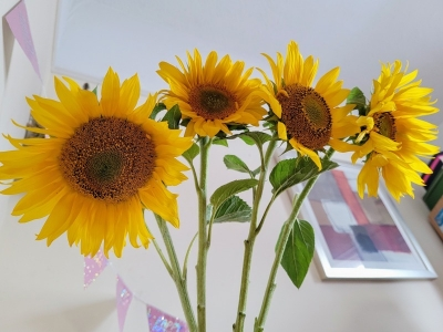 sunflowersfromcarlow08212