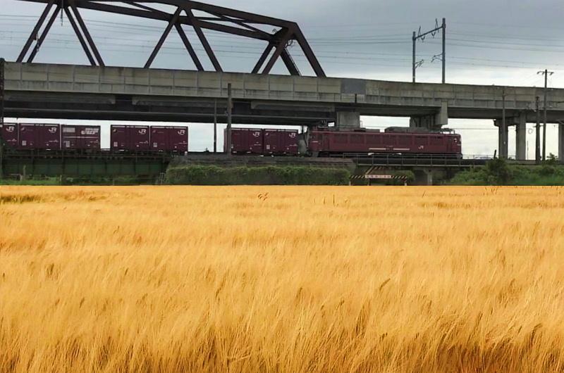 麦秋と貨物