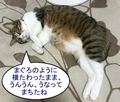 chiko0916-3.jpg