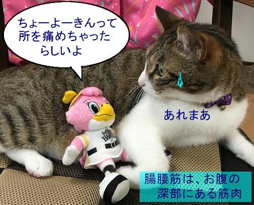 chiko0916-4.jpg
