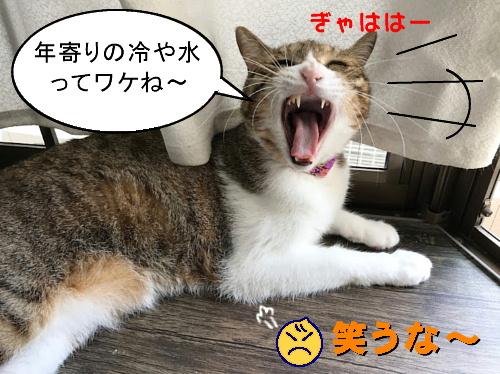 chiko0916-5.jpg