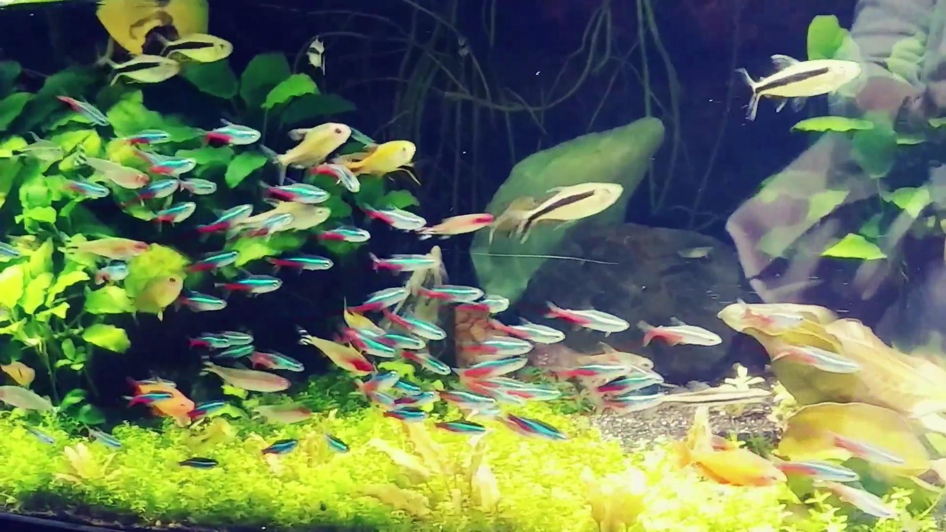 fish2_Moment.jpg