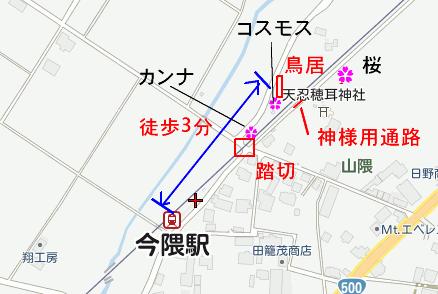今隈地図コスモス桜