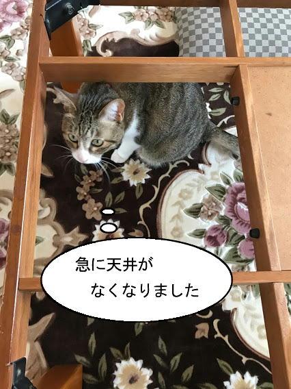 kotatsu001.jpg