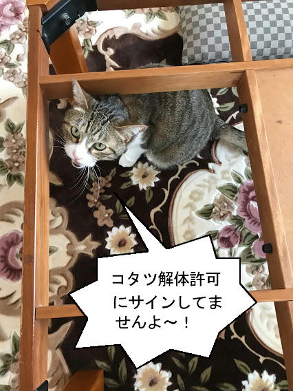 kotatsu002.jpg