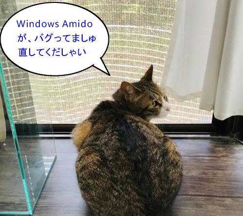 windows-amido2.jpg