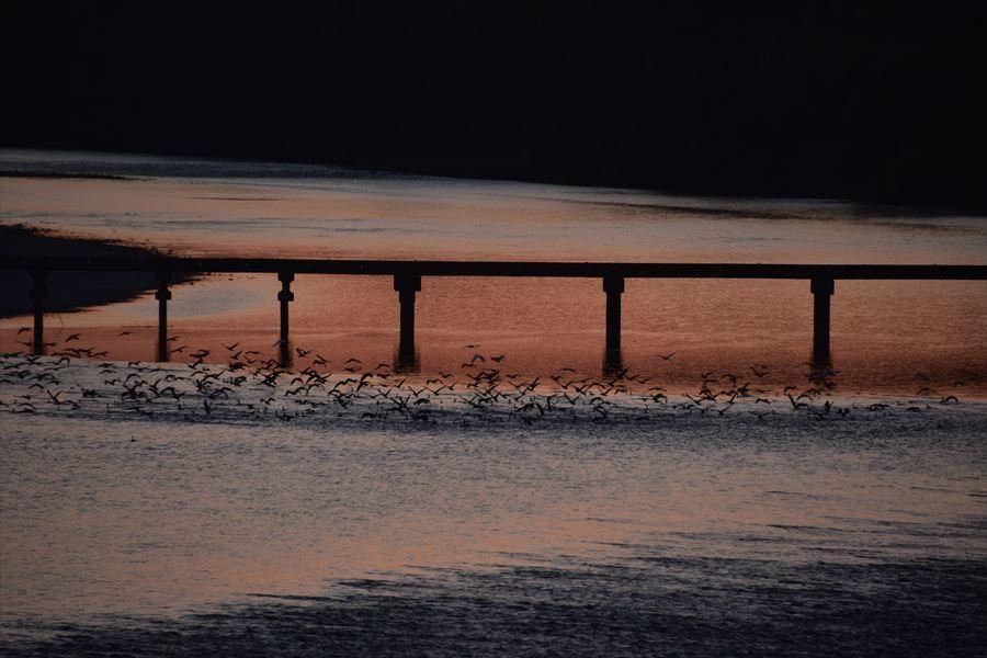 鵜と夕日4