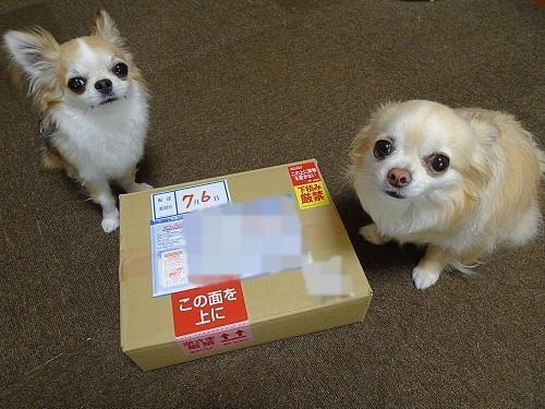 にゃうわんさんからプレゼント♪ 柚子 杏子