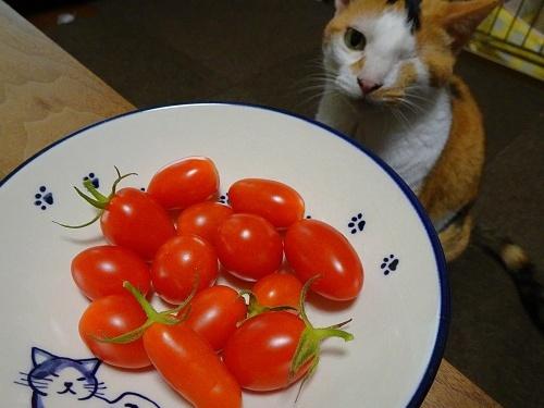 ミニトマト あられ