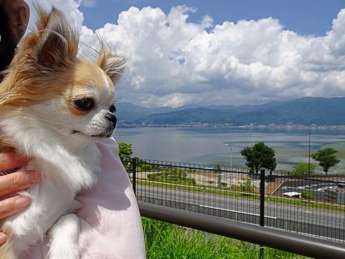 諏訪湖SA 杏子