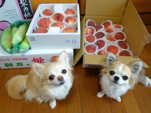山梨の桃 柚子 杏子
