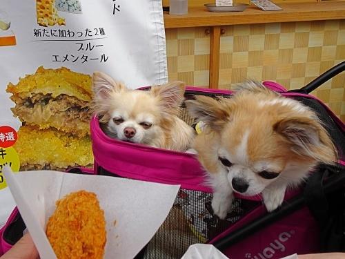 お伊勢さん 柚子 杏子