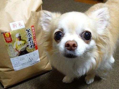 きらちろママさんからプレゼント♪ 柚子