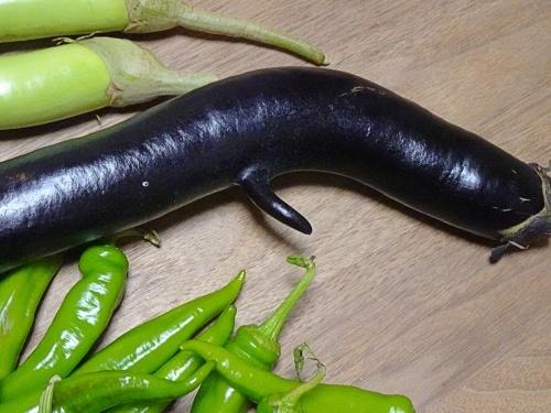 頂き物お野菜