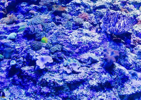 deep sea5345