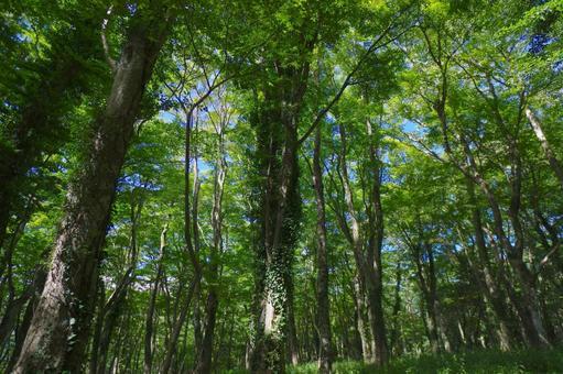 Forest346534.jpg