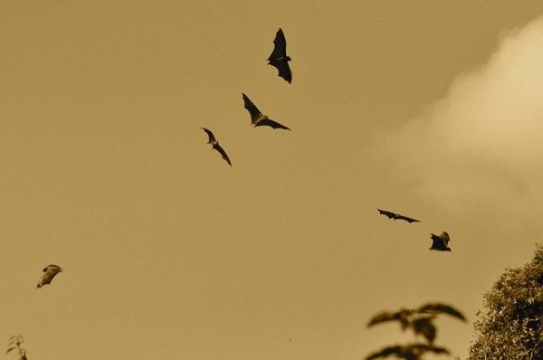 bats-164210_640.jpg