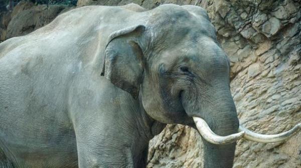elephant3462.jpg