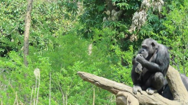 monkey978.jpg